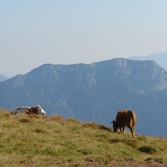 Alpine grazing