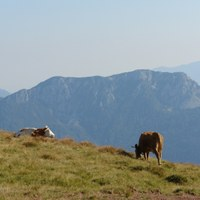 Alpine grazing