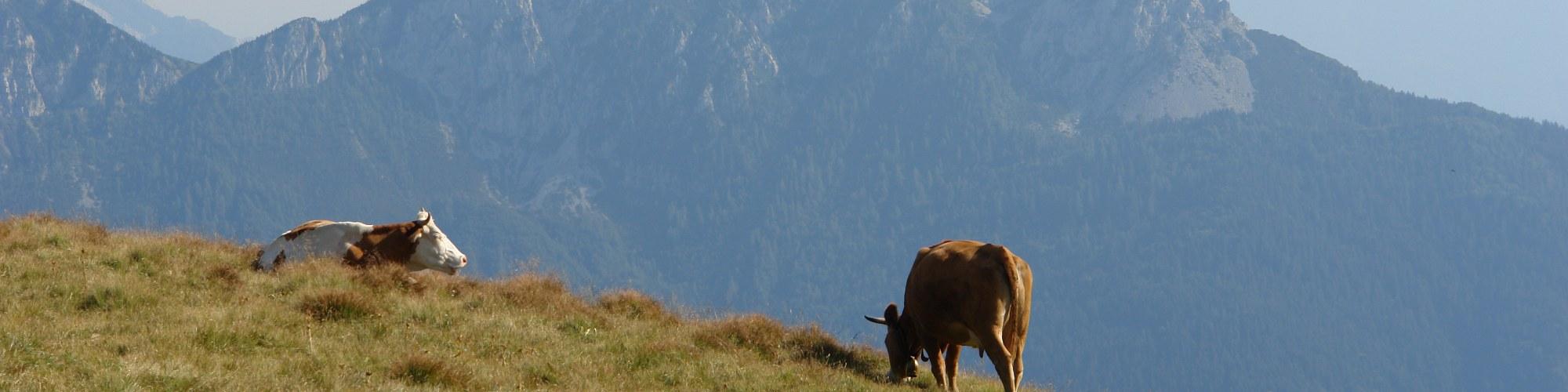 Alti pascoli (Monte Dimon Ligosullo)