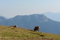 2) Alti pascoli (Monte Dimon Ligosullo).JPG
